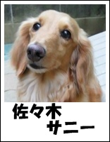 佐々木サニー